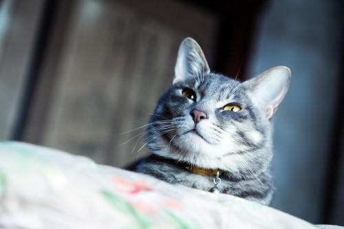 ネコと寝起きを共にする喜び