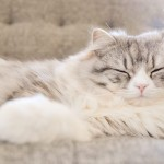 ネコを育てる上での環境を整える