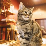 キレイ好きなネコのために掃除をしよう