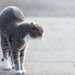 ネコを迎える際の環境をチェック
