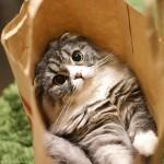 ネコを飼うなら子猫?成猫?