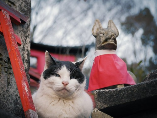 ネコの性別による行動の違いとは
