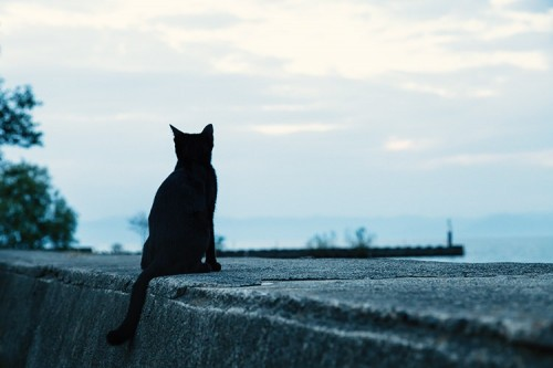ネコにはたくさんの種類がある