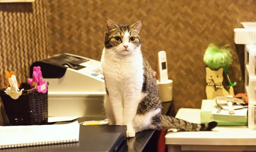 血統登録・血統書付きのネコについて