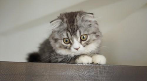 ネコと生活するための部屋づくり
