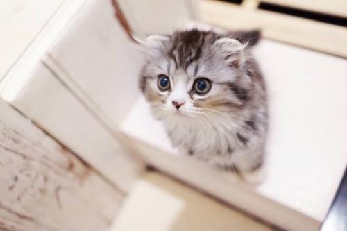ネコを連れてくる時の注意事項