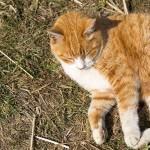 ネコに食事を与えるときの注意事項
