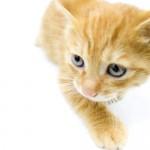 ネコに必要な栄養素・カロリーとは