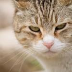 ネコに与えてはいけない食品