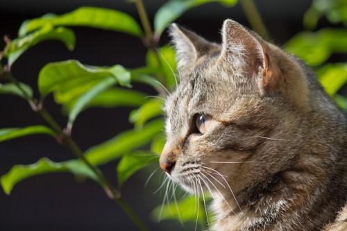 子ネコの離乳食について