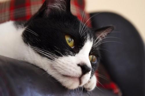 ネコを他のペットとも仲良く育てるために