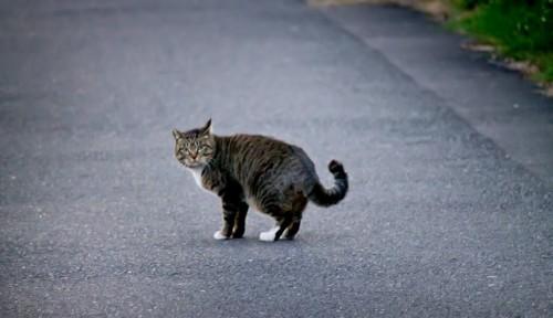 ネコのしつけは早めにしっかりと