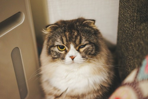 ネコをよそに預ける際に気をつける点