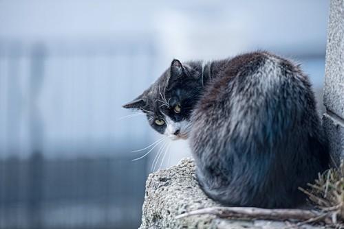 ネコの家出について