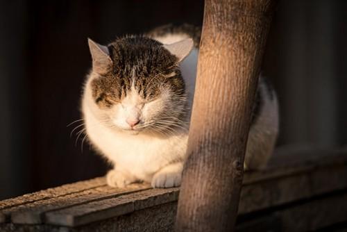 ネコの老後のケアについて