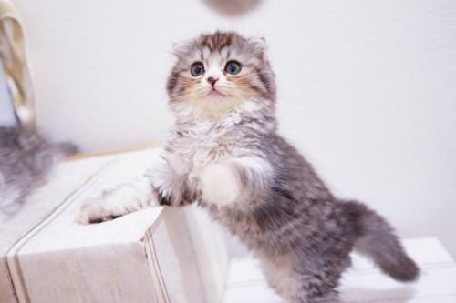 ネコとの遊び方を工夫しよう