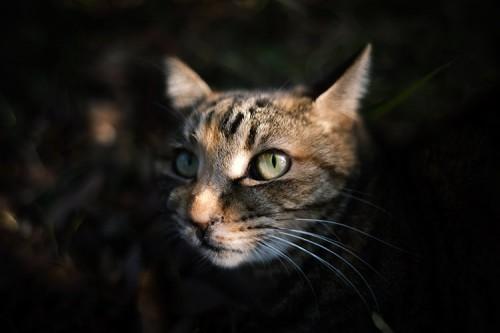ネコによくある病気について