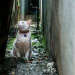 ネコの口や目の病気について