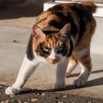 ネコに多いその他の病気について