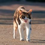 ネコの病気やケガの際の応急処置