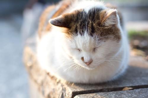 ネコの伝染病と予防接種