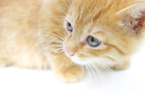 ネコのストレスとその解消法