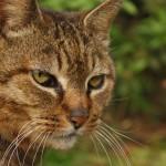 ネコのホームドクターと治療費
