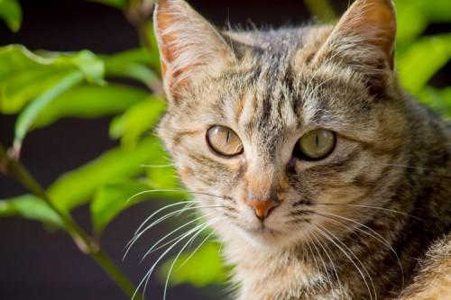 ネコの季節ごとの健康管理