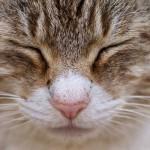 ネコの避妊と去勢について