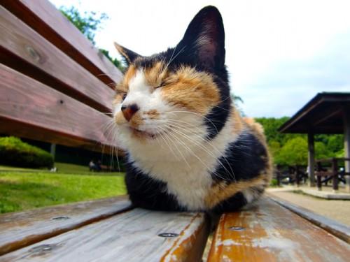 ネコの出産に備えての準備