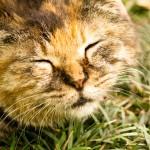 ネコの出産のときを迎える際