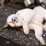 ネコの異常出産のときの処置
