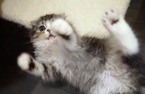 ネコから人間にうつる病気