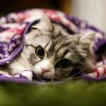 ネコの首輪とおしゃれなお洋服